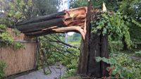 Połamane drzewo w Barcinie (fot.Twoje Info/Kamil)