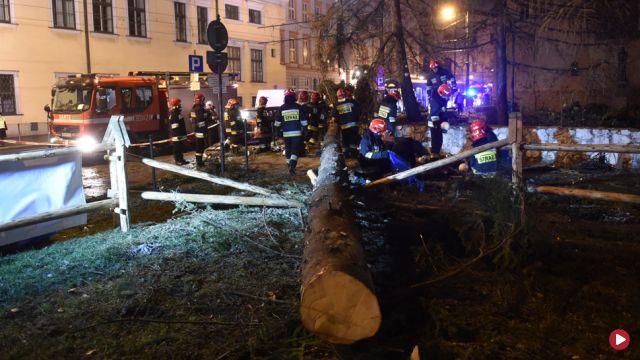 Mocno wieje. W Krakowie przewróciła się 20-metrowa choinka, uszkodziła samochody