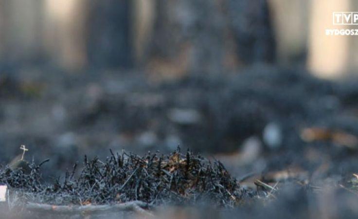 Radzą, jak chronić lasy przed ogniem