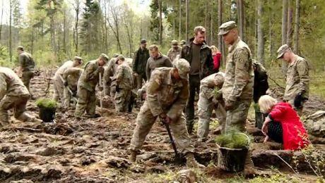 Tysiąc drzew na minutę. Do akcji włączyli się też żołnierze NATO