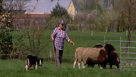 20 czworonogów zmierzyło się w zawodach psów pasterskich