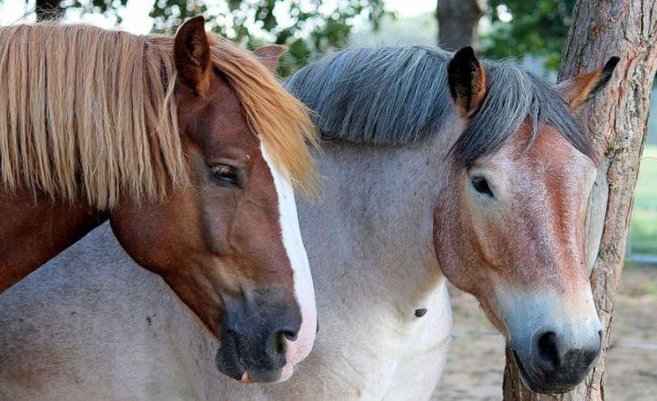 Spotkanie miłośników koni na Kociewiu
