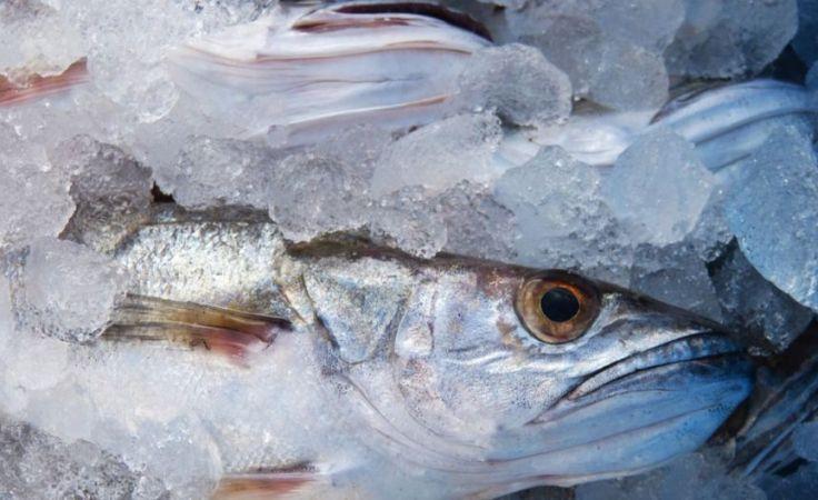 Sprawa przeterminowanych wyrobów rybnych