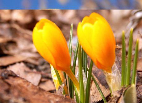 Wiosna zawitała do Bydgoszczy