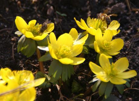 Wiosna tuż-tuż, kwitną już kwiaty!