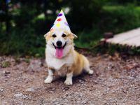 Urodziny pupila