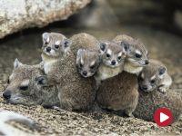 Maluchy w świecie zwierząt, odc. 3 – Górskie maluchy