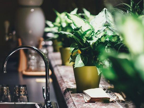 Domowe kwiaty zimą – jak o nie dbać?