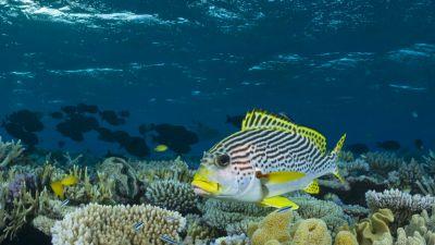 BBC w Jedynce.  Błękitna Planeta,. Seria II, cz. 3 –. Rafy koralowe