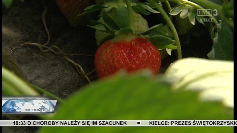 W efekcie owoce kosztują dwa razy drożej niz w ubiegłym roku