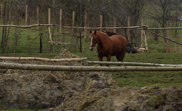 Wolica: co się stało z końmi? Zgłaszają się ich właściciele
