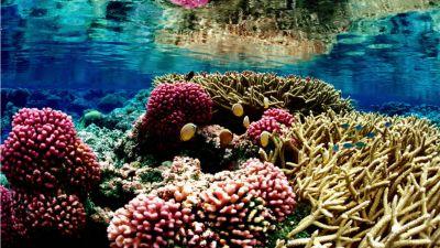 Natura w Jedynce – Wielka Rafa Koralowa. cz. 1. Cud natury
