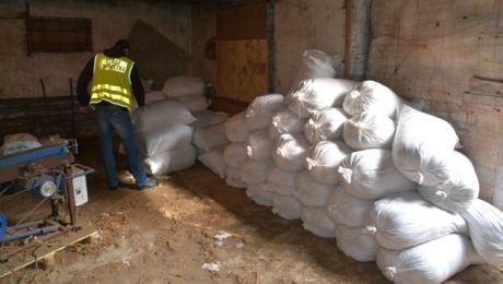 Łącznie zabezpieczono ponad 22 tony suszu roślinnego o wartości prawie 10,5 mln zł