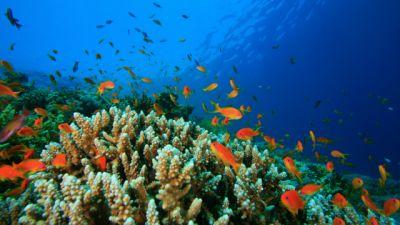 Natura w Jedynce – Oceany, cz. 3. Morze Czerwone