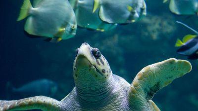 Otchłań żółwia