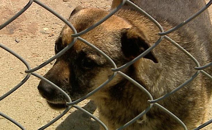 Machowskie schronisko dla zwierząt szuka stałego miejsca