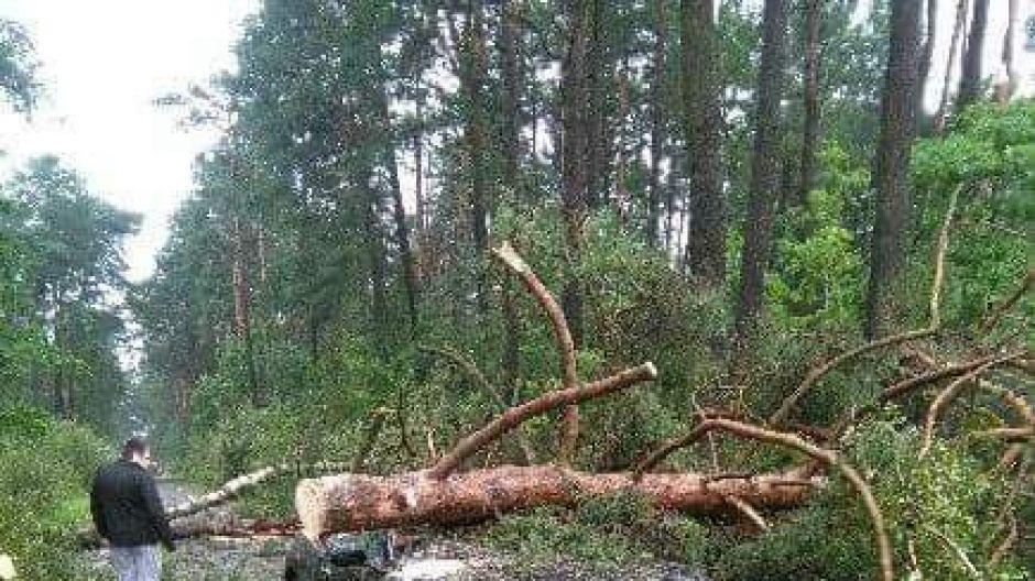 Dzewo powalone na auto w Chojnicach (fot.Twoje Info/Marek)