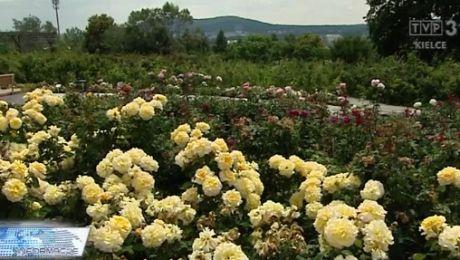 Ogród botaniczny - budzi zachwyt