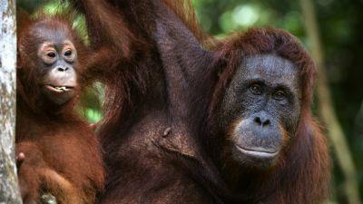 Natura w Jedynce - Nasi kuzyni - odc. 2. Małpy