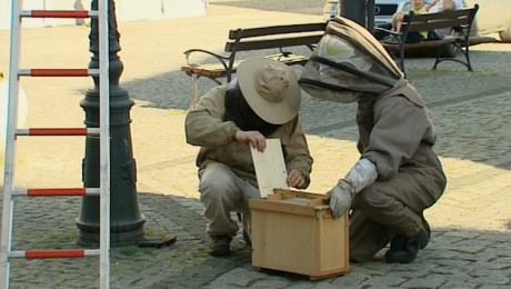 Film od widza: strażacy ze Świebodzina usuwają gniazdo os
