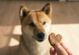 dlaczego-twoj-pies-kocha-przekaski