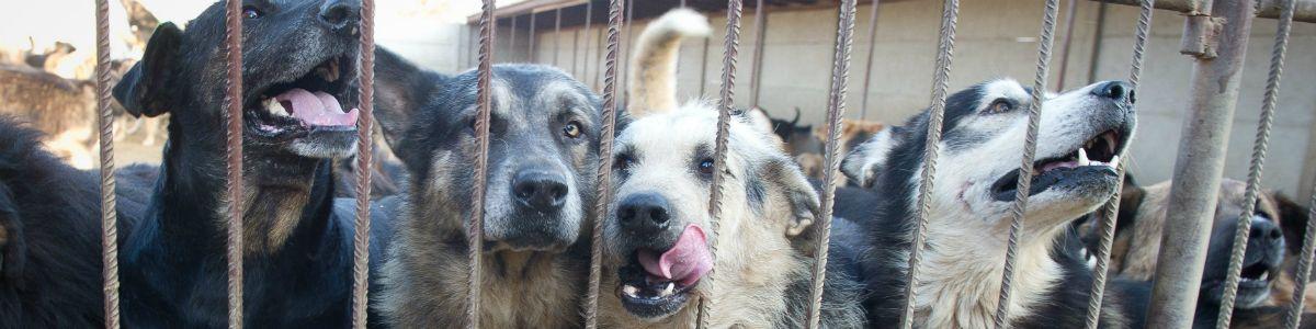 Fabryka psów