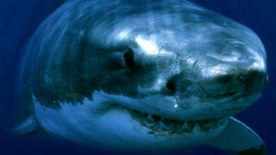 Natura w Jedynce  – Cudowny świat przyrody. Rekiny wielorybie