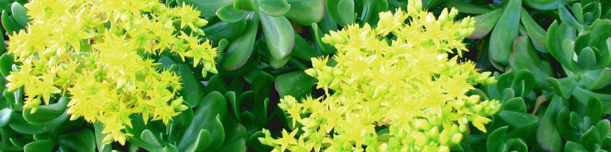 Rośliny, które lubią mocne słońce