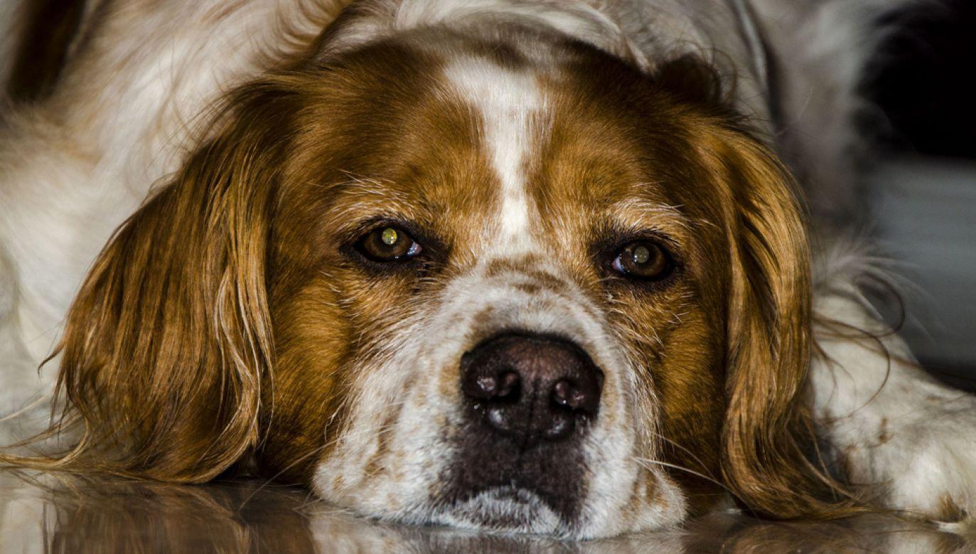 Ustawa zaostrza przepisy dot. m.in. znęcania się nad zwierzętami (fot. pixabay.com/silvion)