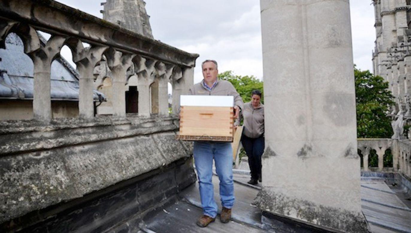 Katedralna pasieka ma dostarczyć w tym roku 26 kg miodu (fot. Materiały prasowe)