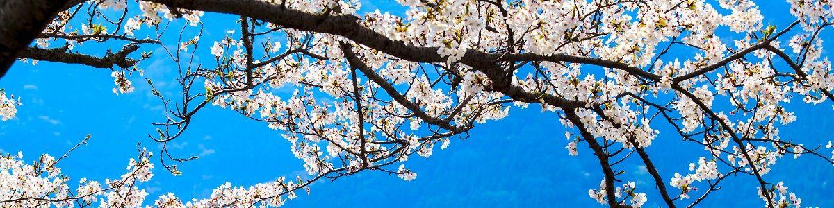 Przepych wiosny