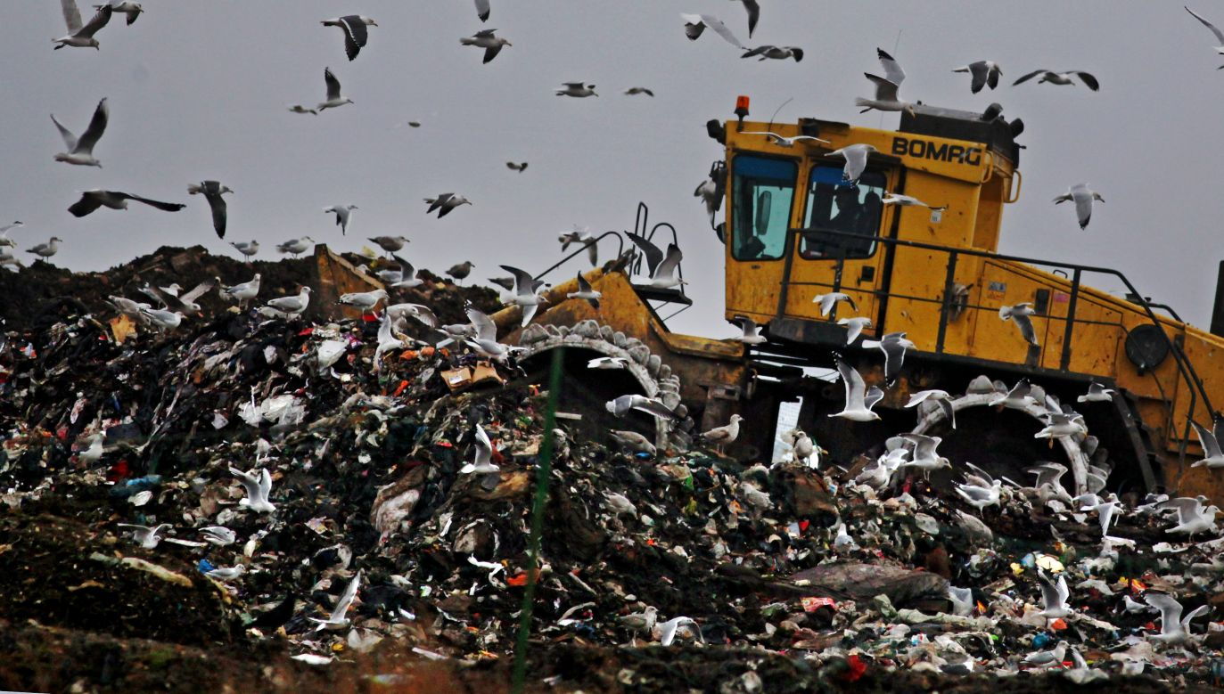 Anglia, 2009 r. Buldożer pakuje świeżo wyrzucone śmieci na składowisku w Gloucester. Fot. Matt Cardy/Getty Images