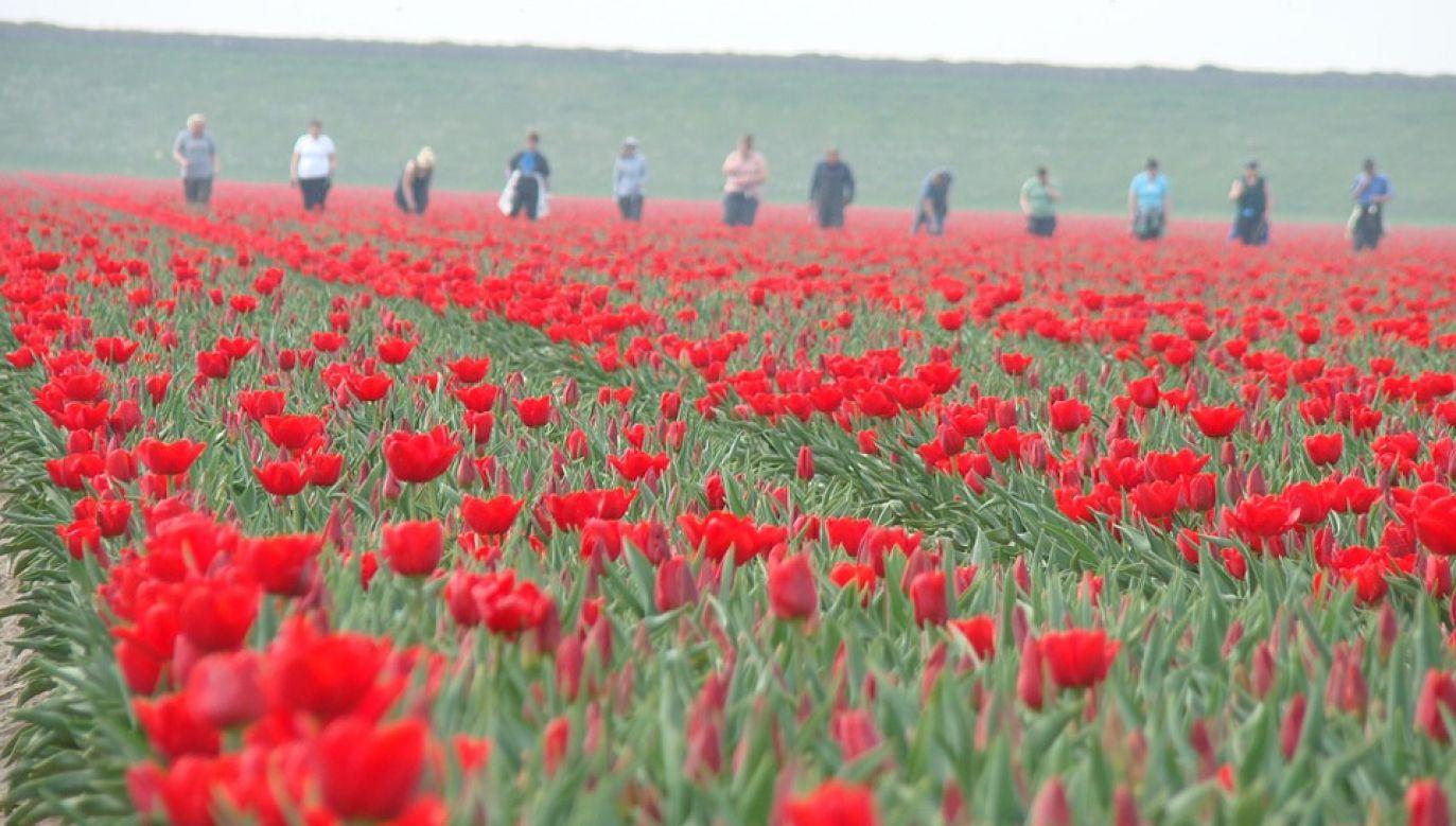 Liczba Polaków skrzywdzonych w Holandii jest trudna do oszacowania (fot. Pixabay)