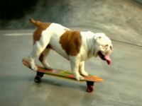 Psie rekordy