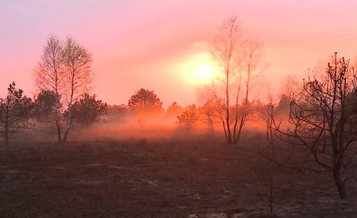Spłonęło prawie pół tysiąca hektarów wrzosowisk.