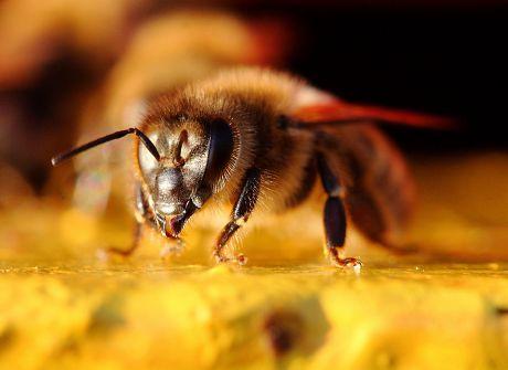 Pszczoły szykują się na zimę
