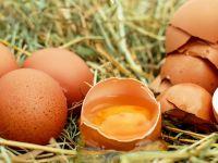 Jajka od A do Z