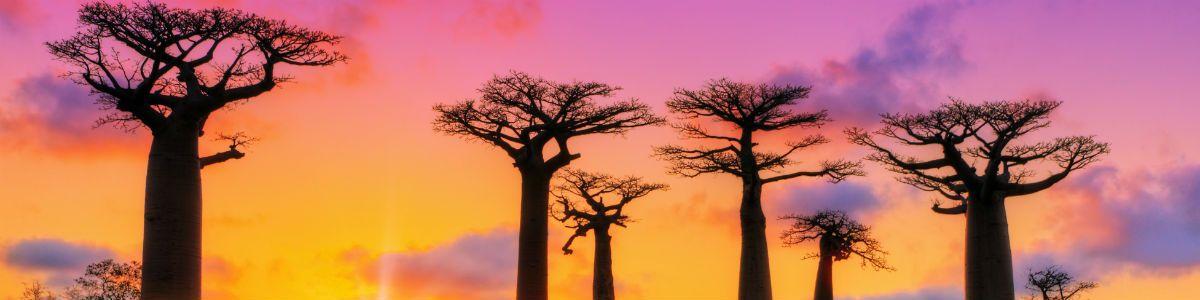 Wyprawa na Madagaskar