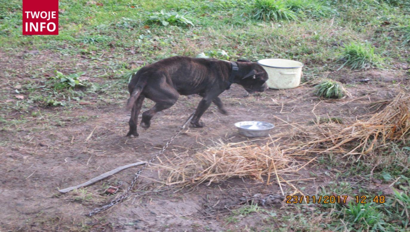 Kobieta upierała się, że karmiła psy trzy razy dziennie (fot. Straż Gminna w Malechowie)