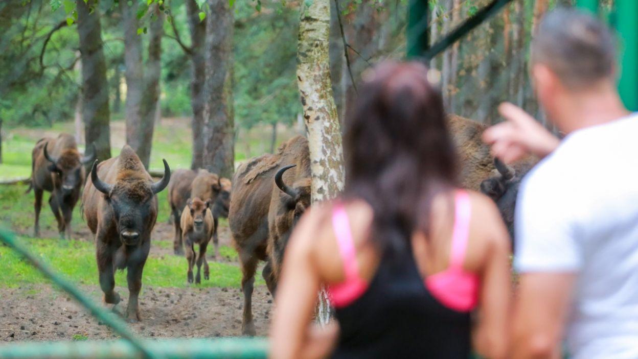 Podczas wycieczki para odwiedziła zagrodę żubrów... (fot. W. Kurczewski)