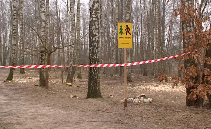 Las na olsztyńskim Pieczewie do wycinki? Leśniczy uspokajają