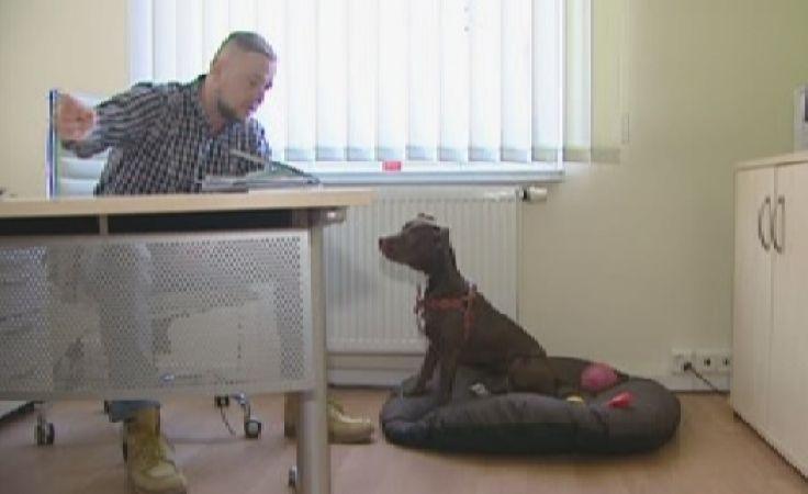 Z psem do biura - to nie żart