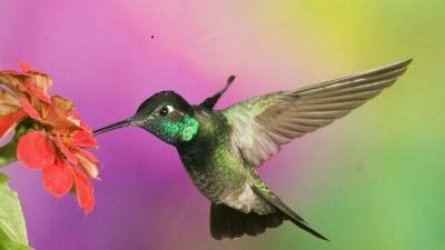 Natura w Jedynce - Koliber i jego mały świat