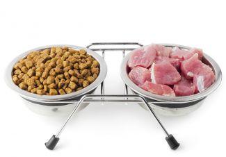karma-gotowa-czy-domowa-kuchnia-czyli-co-jest-dobre-dla-psa