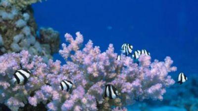 Natura w Jedynce: Enklawy dzikiej przyrody, cz. 11. Głębiny mórz