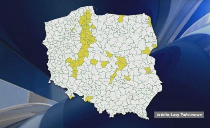 Leśnicy przestrzegają: obszary dotknięte nawałnicą niebezpieczne