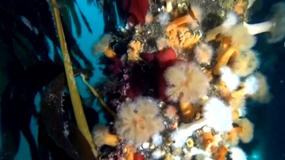 nurkowanie-na-snieznej-rafie