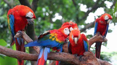 Natura w Jedynce – Papugi są wśród nas