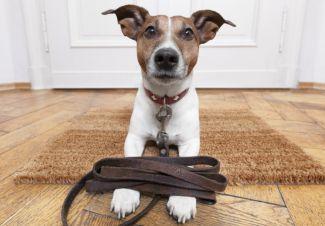 przemysl-zanim-adoptujesz-psa