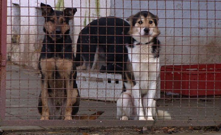 Porzucone czekają na nowy dom.